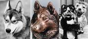 Husky Through the Ages thumbnail